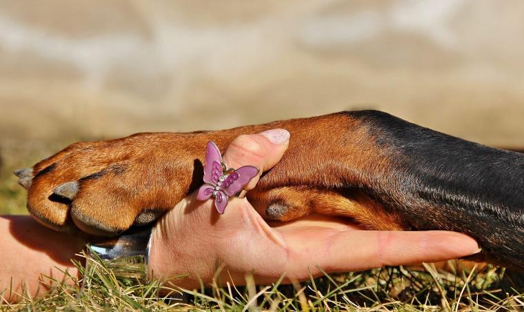 Partenariat avec Pet Friendly Label